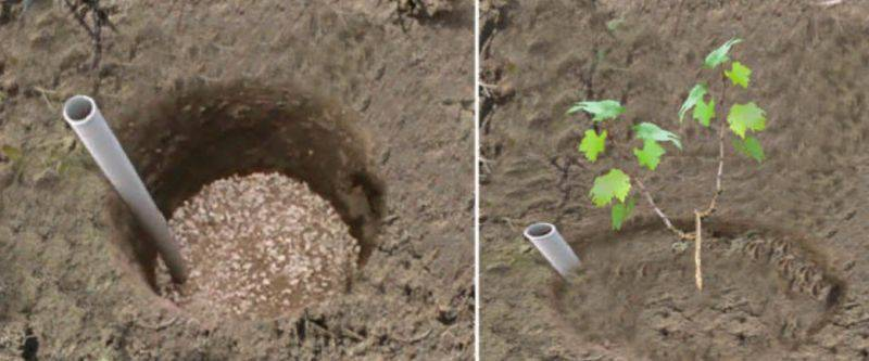 Посадка винограда. Самый простой подкормочный узел - на дно ямы высыпать гравий, щебень, камни, керамзит и вставить туда трубу.