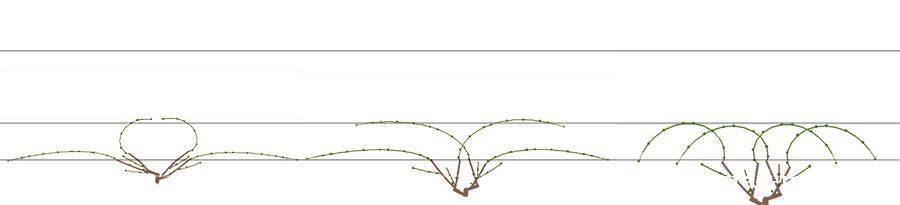 Способы подвязки лоз плодоношения при бесштамбовой многорукавной формировке куста.