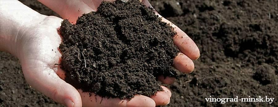 Подготовка почвы для виноградника