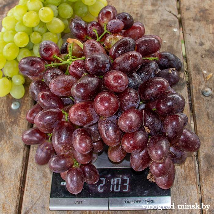 Хаджи Мурат виноград, купить черенки и саженцы сорта Хаджи Мурат в Минске