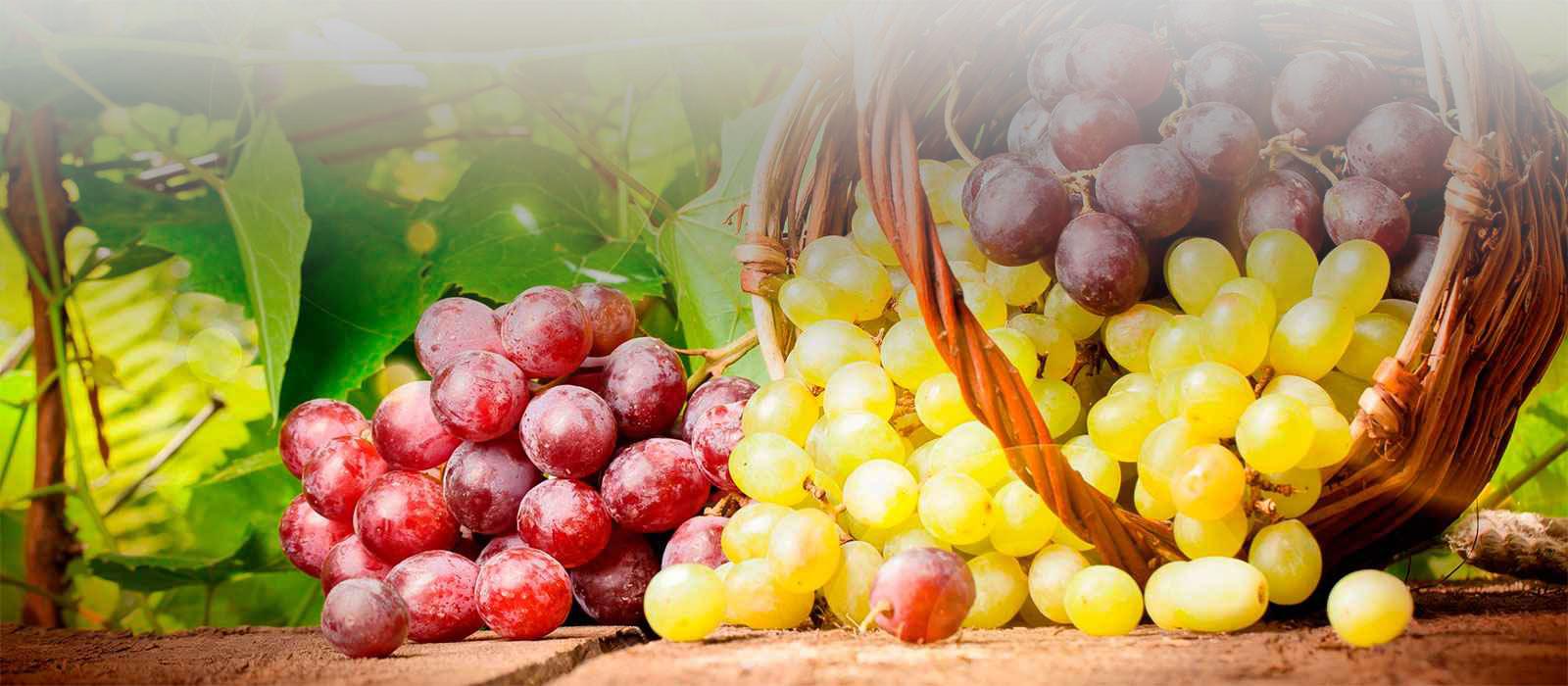 Бессемянные сорта винограда